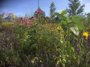 Jarní kurzy spolku Aromaterapie & Bylinky