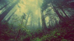 Podzimní kurzy spolku Aromaterapie & Bylinky